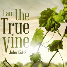 True Vine - Branches