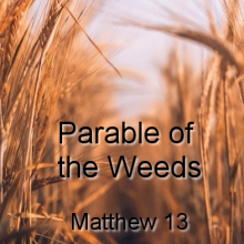 Parable of the Weeds